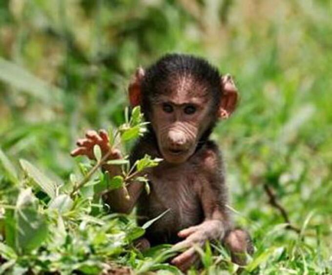 tot ce trebuie să știți despre Bitcoins maimuță)