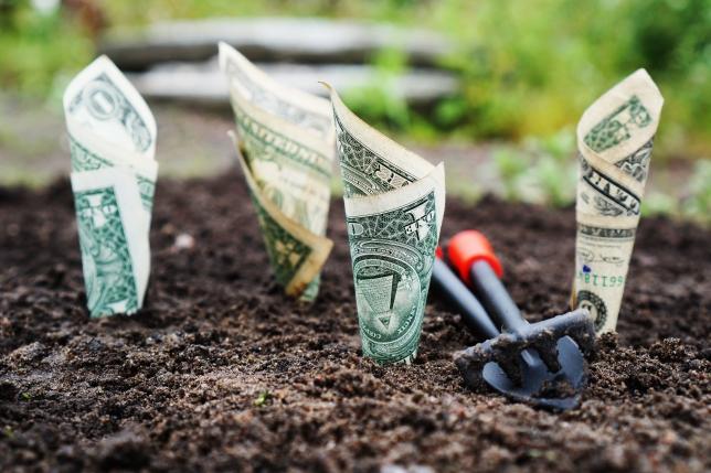 Ai teren si vrei sa faci bani? Noi iti dam un pont de afacere agricola!