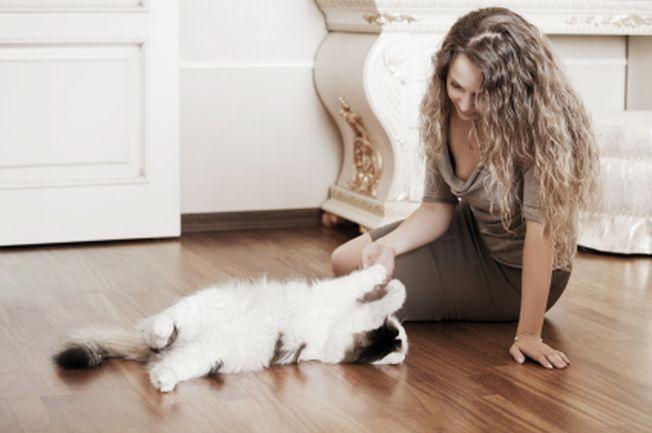 pisică în opțiuni predicție preț criptomonedă litecoin