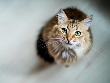 Cum să îngropați o pisică: opțiuni posibile - Animale de companie -