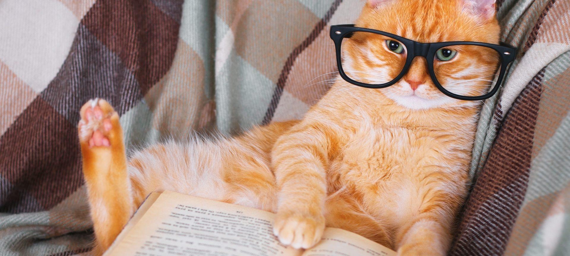 pisică în opțiuni)