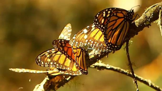 strategie fluture pentru opțiuni