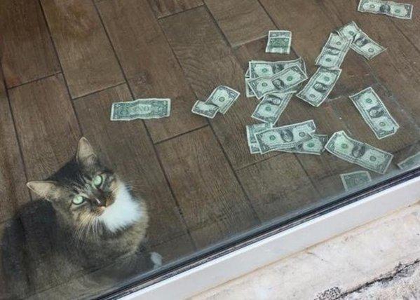 Cashnip Kitty, pisoiul care aduce bani