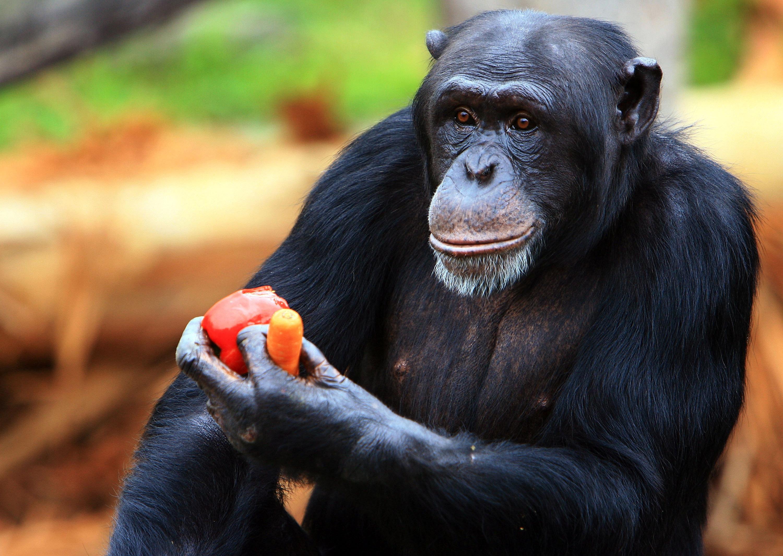 tot ce trebuie să știți despre Bitcoins maimuță