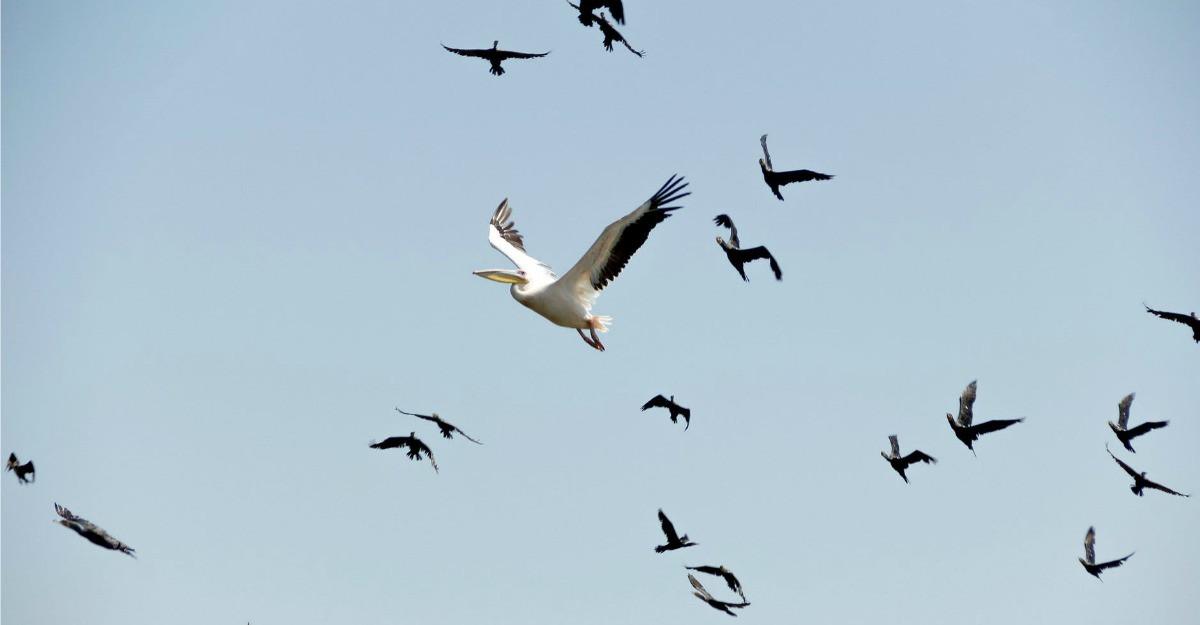 10 motive pentru care merită să conservăm Delta Dunării   WWF