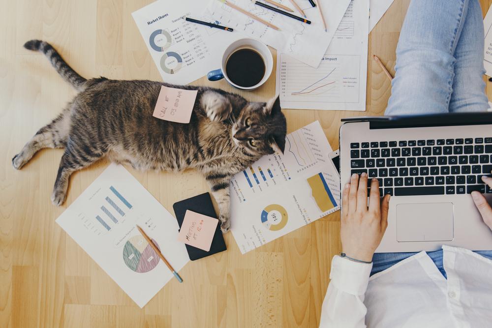 Job part time/acasa cu venituri incepand de la $ | Internet Marketing | Freelancer