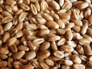 CME introduce optiuni pentru contractele futures cu cereale din bazinul Marii Negre