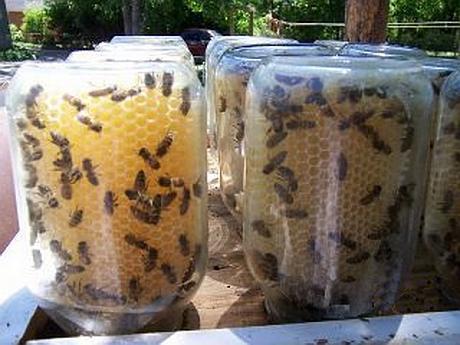 platformă de tranzacționare cu fagure de miere)