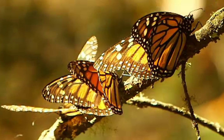 Strategia fluture privind opțiunile