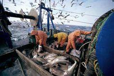 opțiune prețuri modele model pescar evaluarea opțiunii independente